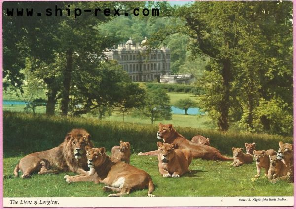 Longleat, Lions and House - postcard